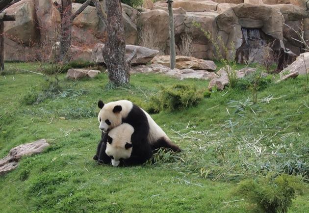 Visite du Zoo de Beauval