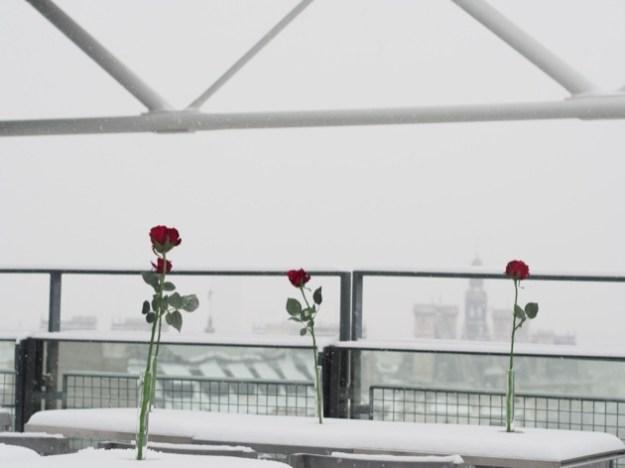 A Paris sous la neige l'important c'est la rose !