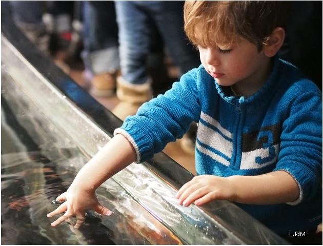 bassin_aquarium