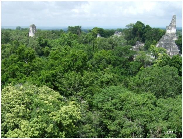 site_maya