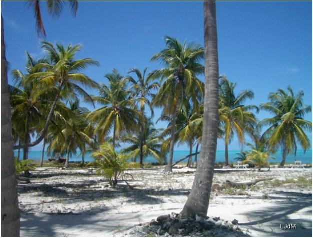 ile_palmiers