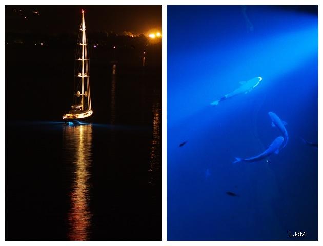 port_calvi_night