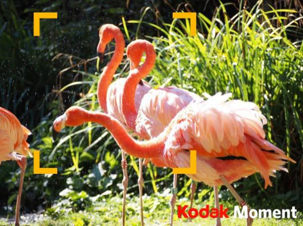 Votre_Kodak_Moment