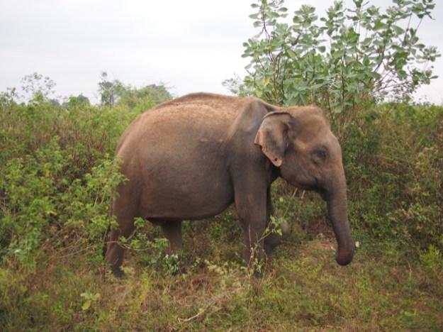 Notre voyage itinérant au Sri Lanka avec les enfants