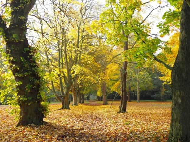 parc à Wimbledon