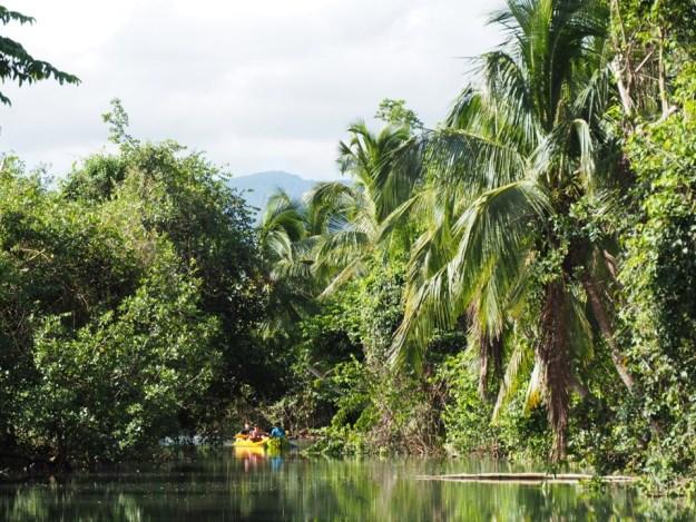 mangroce guadeloupe
