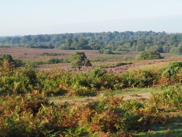 best spots in the new forest