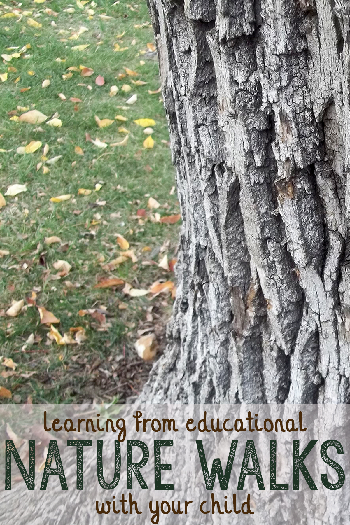 Educational Nature Walk Activities For Any Age