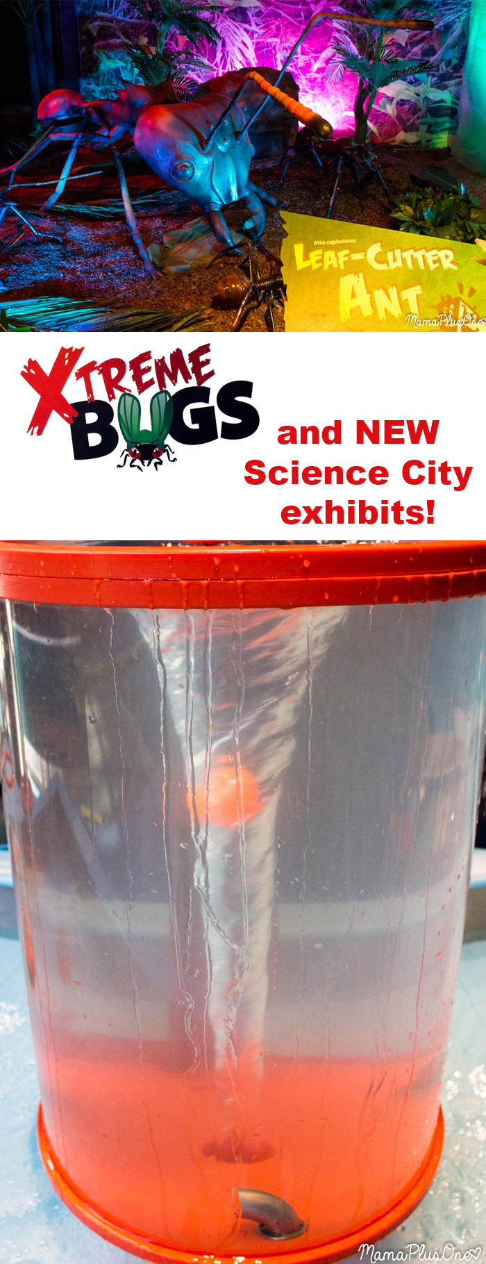 If you're in the Kansas City area (or even if you aren't), you don't want to miss these exhibits. XTreme Bugs runs through April, and the new Science City exhibits are great permanent additions to the facility! Read what's new, then stop by and visit.