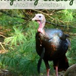 How a Highway Turkey United My Hometown
