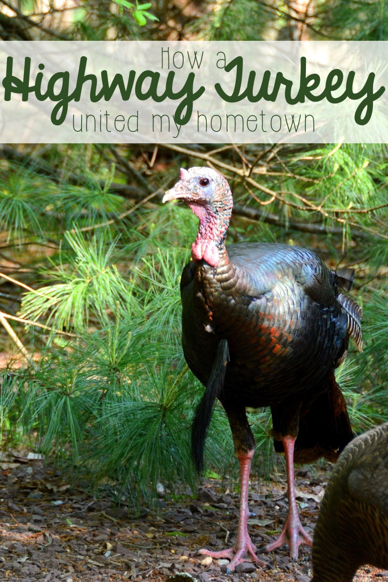 Have you ever seen something little bring your whole town together for good? In my hometown, it was a turkey.... a simple turkey that led to a massive change in the way our town cooperated and worked together, and that brought together people from around the country, too.