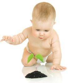 baby-plant