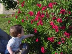 oleander i beba