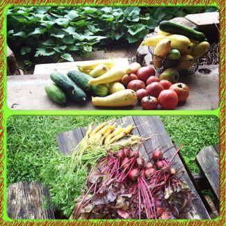 """Fresh produce from the garden. When kids come in whining about """"I'm hungry"""" in the summertime, I simply unleash them in the garden and let them have at it!"""