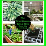 Great Garden Tips & Ideas