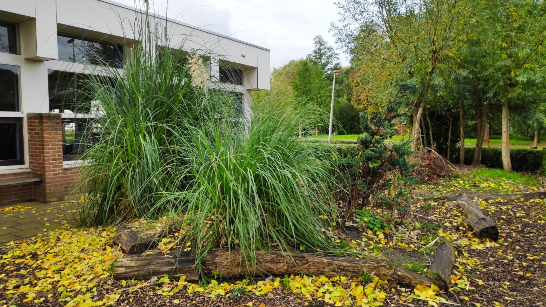 groen schoolplein Prinses Margriet Zoetermeer bosjes
