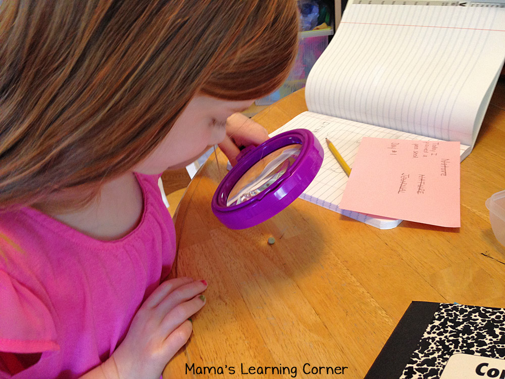Looking at Rocks with the Magnifying Glass