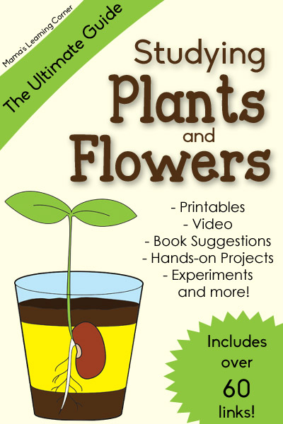 The Ultimate Guide to Studying Plants and Flowers
