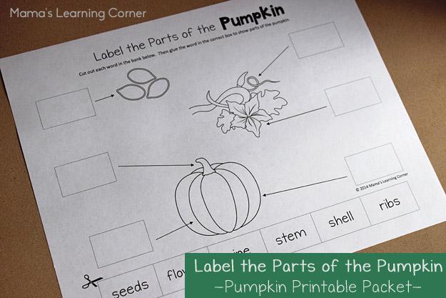 Pumpkin Life Cycle Worksheets