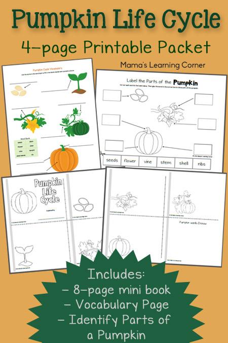 Pumpkin Life Cycle Worksheet For Kindergarten