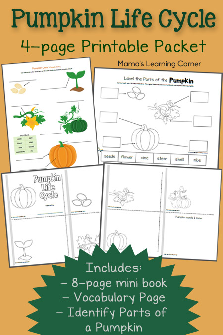 photo relating to Pumpkin Life Cycle Printable called Pumpkin Lifestyle Cycle Worksheets - Mamas Discovering Corner