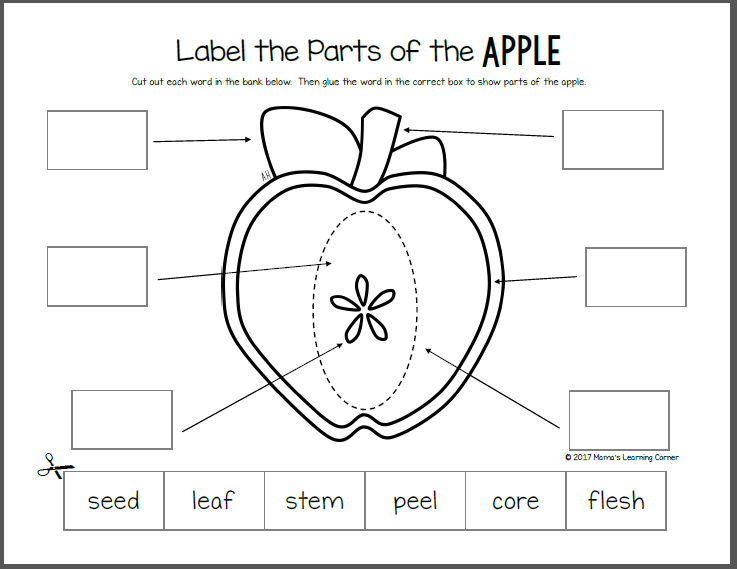 picture relating to Apple Printable titled Apple Lifestyle Cycle Worksheets - Mamas Mastering Corner