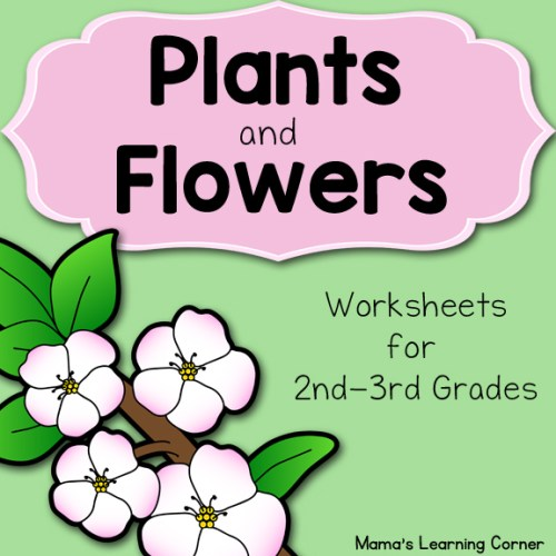 Plants and Flowers Worksheets