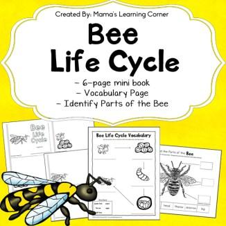 Bee Life Cycle Worksheets