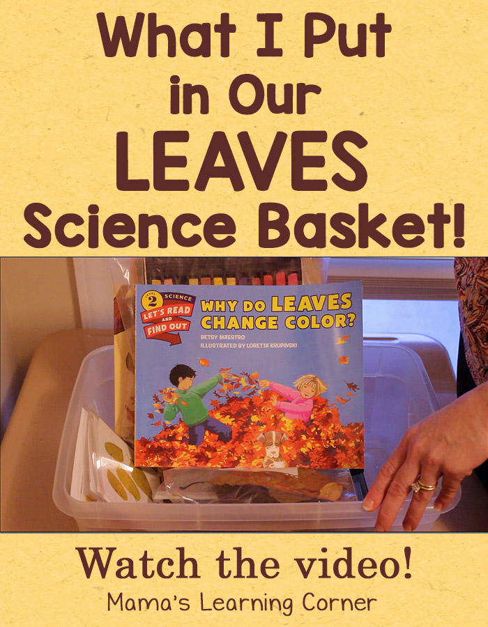 What I Put in Our Leaves Science Basket