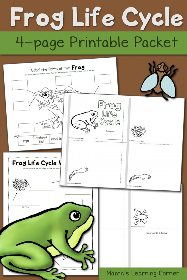 photo relating to Frog and Toad Are Friends Printable Activities identify Frog Existence Cycle Worksheets - Mamas Studying Corner