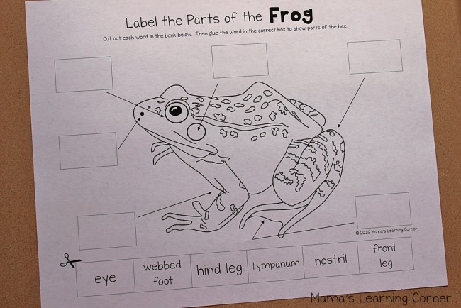 Life Cycle of a Frog - Label the parts of a frog