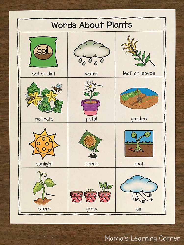 Plants Writing Booklet