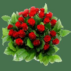 rode rozen voor Valentijn