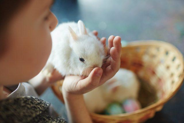 De leukste buitenactiviteiten met kinderen (budgetproof!)  Shutterstock Door Pressmaster