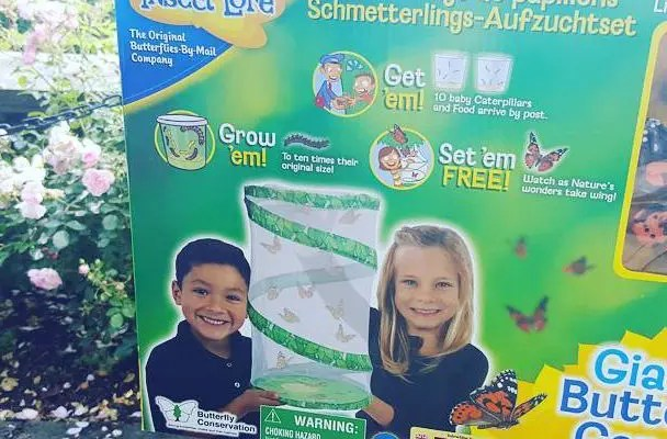 How to Grow Butterflies at Home!