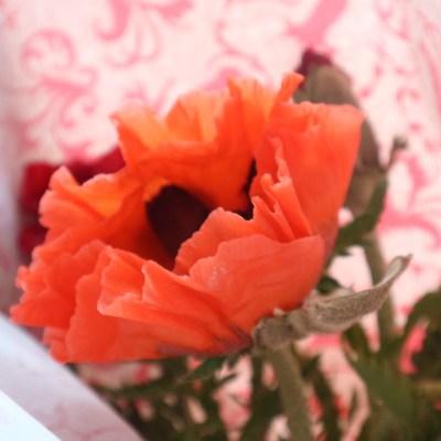 Muttertags-Wochenende in Bildern 12./13. Mai 18