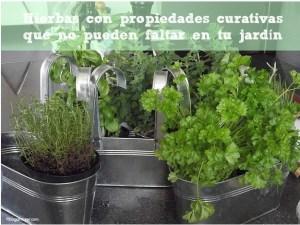 Hierbas con propiedades curativas que no pueden faltar en tu jardín