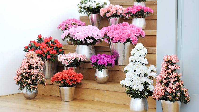 plantas, hogar