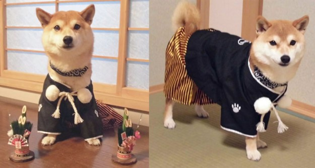 札幌の小太郎くん