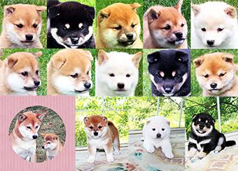 豆柴ブリーダー 富士野荘のFacebook