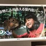 オービィ横浜 どうぶつ ふれあい 室内 子育て 関東 子どもと行ける
