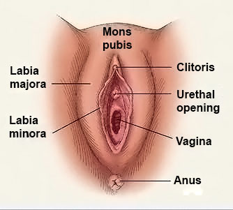 women with penis and vagina