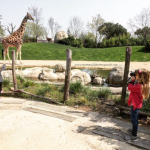 zoom torino giraffe