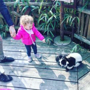 zoom torino lemuri