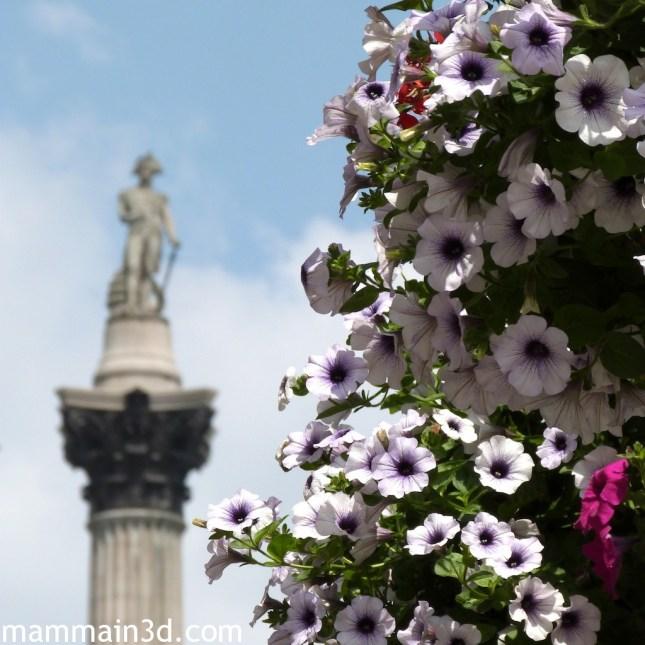 Londra: fiori davanti al monumento a Nelson in Trafalgar Square