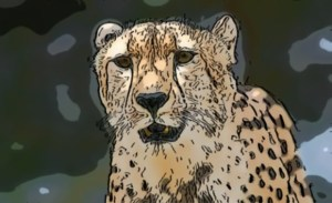 Douglas Cheetah photo