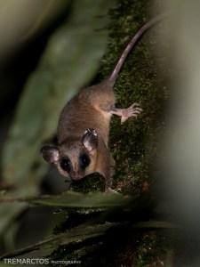 Mouse-Opossum-3d