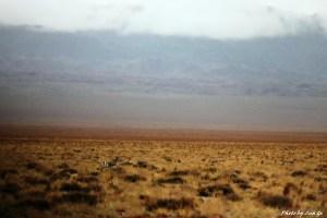 zzimg_0121-gazelle