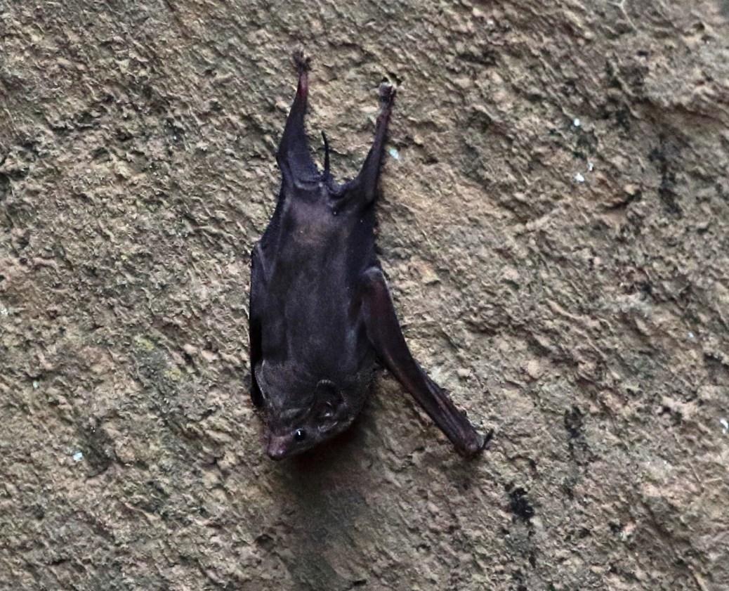 Bat-0892