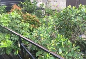 Ahli Taman – Jasa Tukang Taman & Jual Tanaman